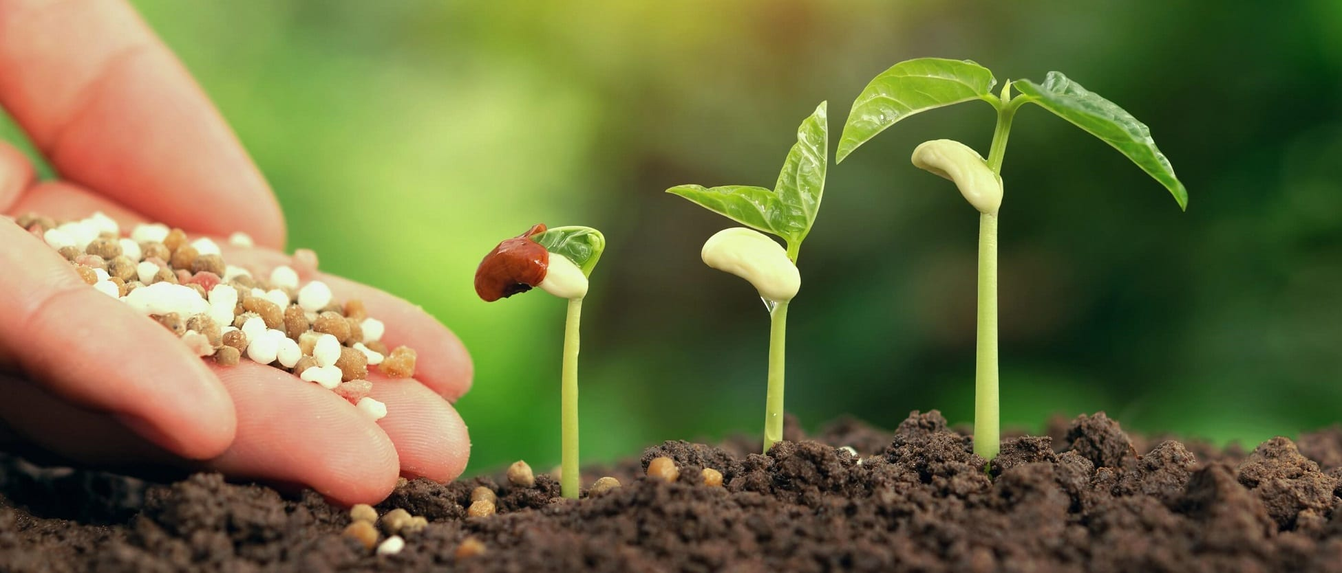 Nurturing plants, growing