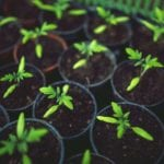 Nurturing leads - potted plants just sprouted