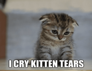 cry kitten tears